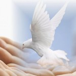 Dove-of-Peace-peace-and-love-revolution-club-25246250-1440-900